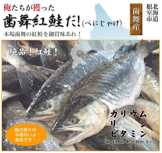鮭にはミネラルやビタミンが多く含まれており、特に牛や豚などの畜肉にはないEPAやDHA、ビタミンDが含まれています。 EPAやDHAは魚の油に含まれている成分で、脳血栓・動脈硬化・心臓病などの予防に効果があり、頭をよくする働きもあります。また、鮭の卵から造られている、「筋子」や「いくら」はEPAやDHAが特に多く含まれており、この卵に含まれているコレステロールはEPAが多いので動脈硬化などへの心配はありません。私どもの獲る安心・安全・美味しい「鮭」を鮮度そのまま、皆様の食卓へお届け致します!!